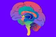 پنج گام موثر برای تقویت حافظه